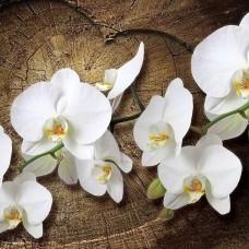 Фототапет любовно послание с орхидеи - 1014
