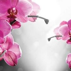 Фототапет розови цъфнали клонки - 1034