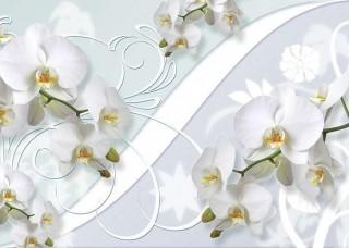 Фототапет млечнобели орхидеи - 1206