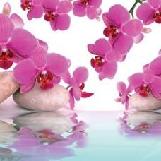 Фототапет красива розова орхидея - 151