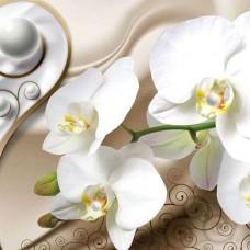 Фототапет бяла орхидея - 2952
