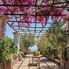 Фототапет градина в слънчев ден - 10334