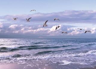 Фототапет чайки на самотен плаж - 13051