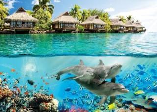 Фототапет подводен живот на кораловия риф - 3193