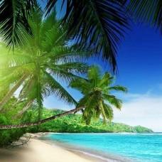 Фототапет палми на далечен плаж - 736
