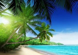 Фототапет с палми и море - 736