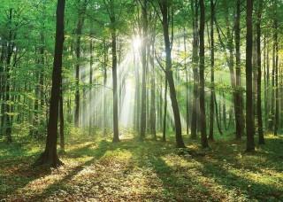 Фототапет слънчеви лъчи в гората - 10329