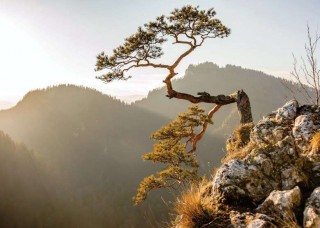 Фототапет дърво с планински фон - 10511