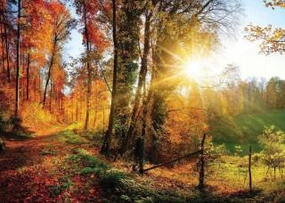 Фототапет - пъстроцветна есенна гора при изгрев - 12108