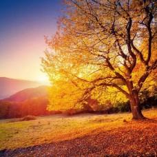 Фототапет есенна гора с падащи листа - 12640