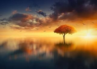 Фототапет дърво сред езерото - 13003