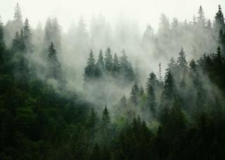 Фототапет борова гора, потънала в мъгла - 13026