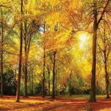 Фототапет слънчев ден в гората - 13460