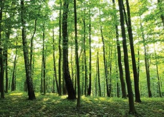 Фототапет зелена гора - 186