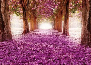 Фототапет розова гора - 2378