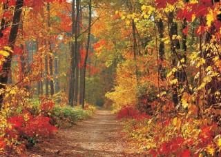Фототапет есенна горска пътека - 4-002