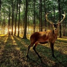 Фототапет елен отблизо - 3194